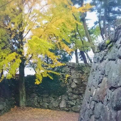 171114松坂城紅葉⑨