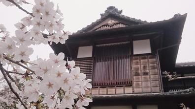 18さくら松坂城6