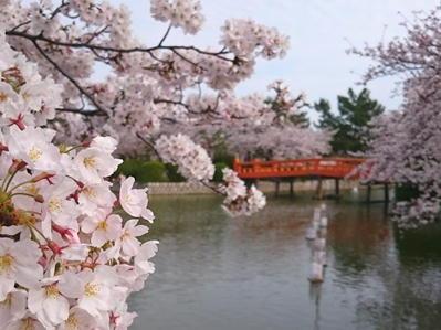 180327桑名九華公園橋