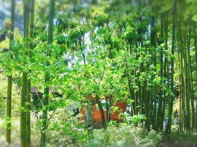 180423フラリエ竹林