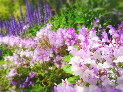 180423フラリエ花壇