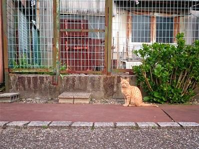 180327桑名九華公園猫