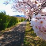 190409阪内川ラン遊歩道