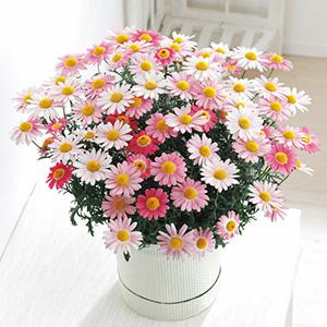 20母の日その他のお花