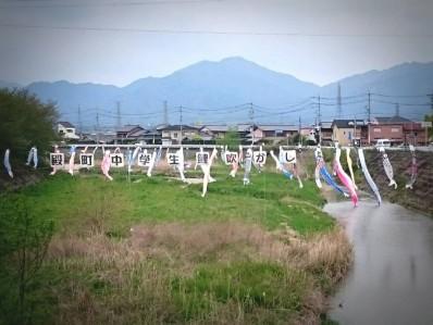 200421阪内川鯉吹き流し2