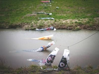 200421阪内川鯉吹き流し1