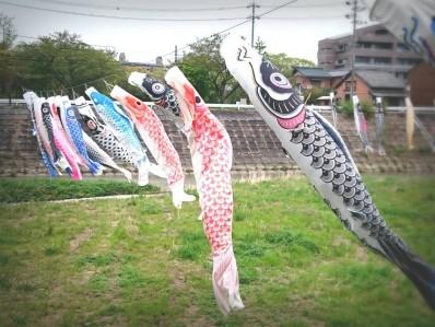 200421阪内川鯉吹き流し0