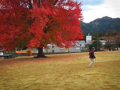201110ハナノキ散歩