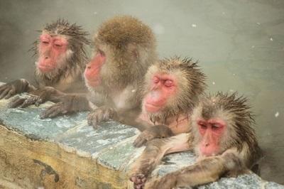 さる温泉入浴猿
