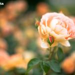 blog0174