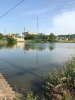 【大きな大谷池】